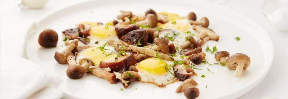 Bospaddenstoelen met kwarteleitjes